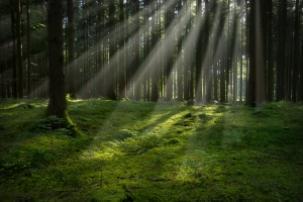 www.freeimages.com/Krappweis