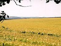 Wójt potwierdza zawarcie umowy dzierżawy gruntów rolnych