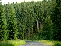 Kto musi płacić podatek leśny?