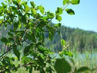 Łatwiej wyciąć drzewa i krzewy