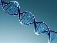 Badania DNA - sposób na ustalenie ojcostwa